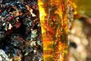 Полезные и целебные свойства живицы кедровой (смолы кедра)
