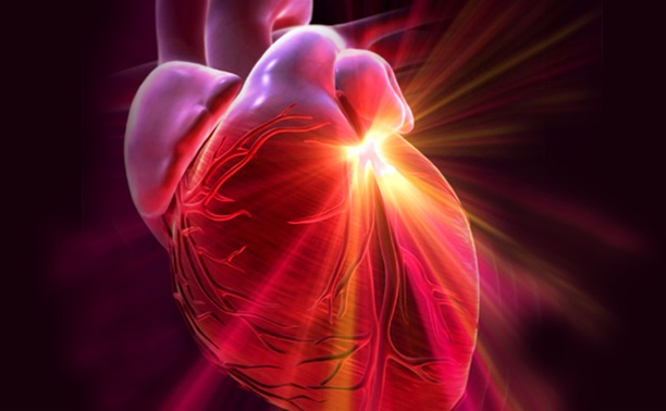 маточное молочко при инфаркте